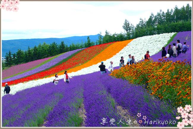 日本國民票選為最想居住的城市  ★  北海道