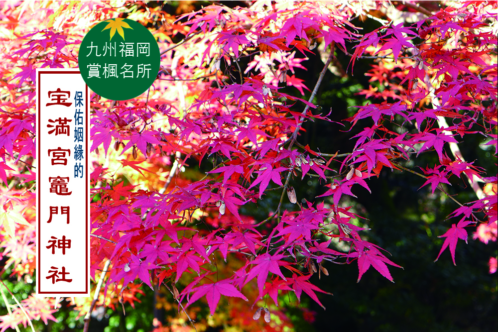 福岡賞楓名所  |  寶滿宮竈門神社  |  良緣御守
